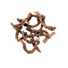 katuki root
